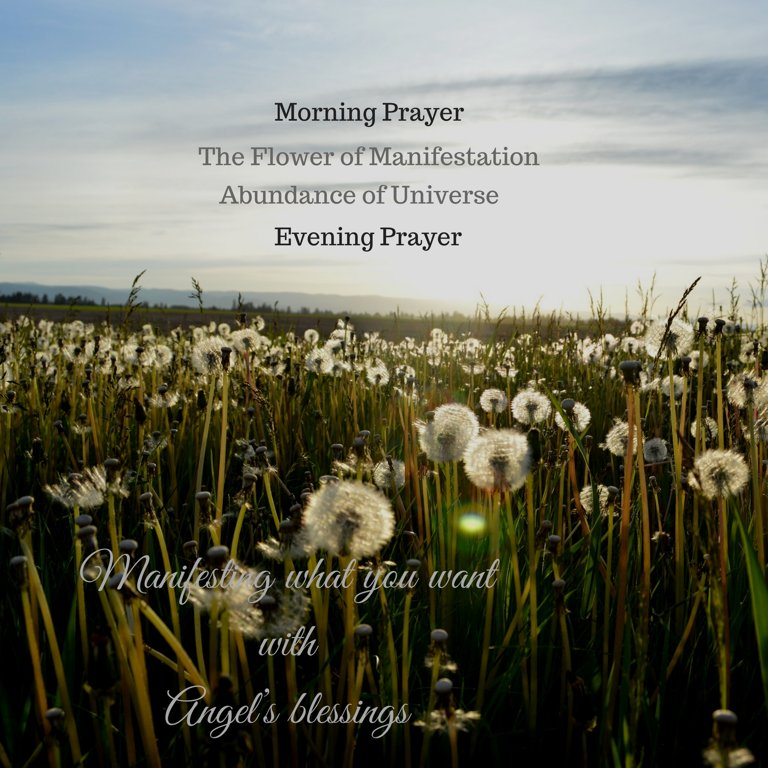The Flower of Manifestation mp3